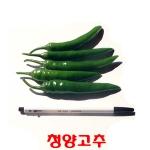 코레마을 꼬레촌 청양고추[10kg]