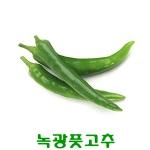 코레마을 꼬레촌 녹광고추 최상품[5kg]